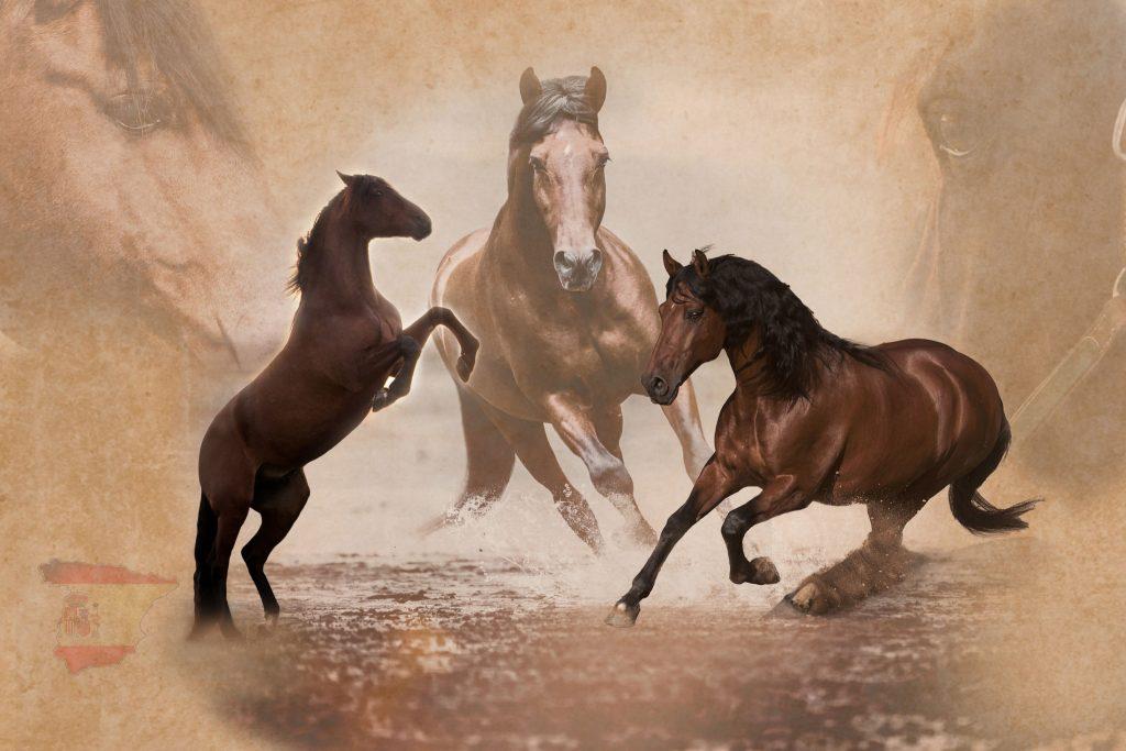 Marion-Luerkens-Collage-Andalusier-Pferde