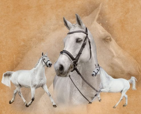 Marion-Luerkens-Collage-Dressurpferd-Sportpferd