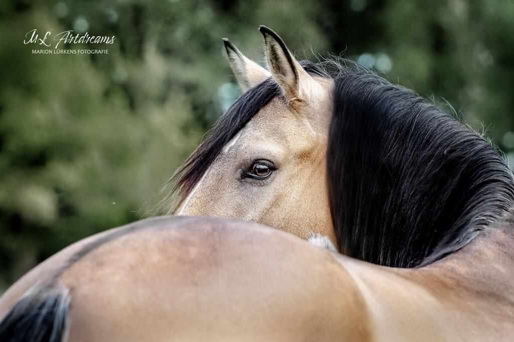 Pferdeportrait-Auge