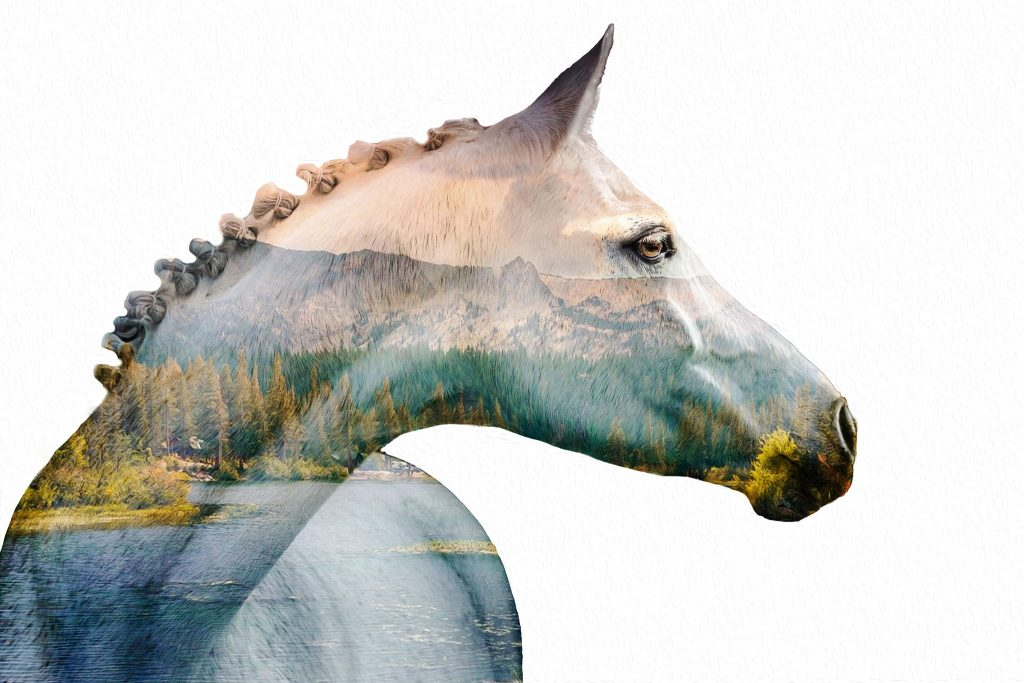 Marion-Luerkens-Fotokunst_Double-Exposure-Portrait-Pferd
