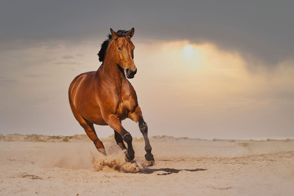 Marion-Luerkens-Fotokunst_Pferd-Himmel