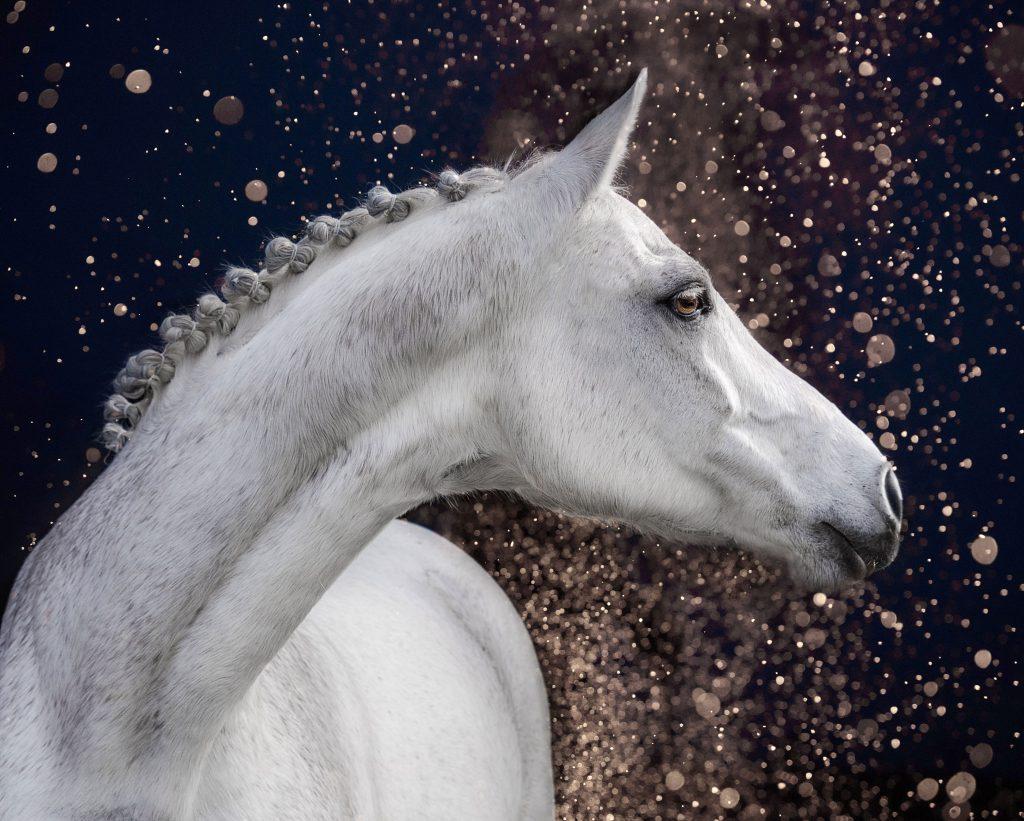 Marion-Luerkens-Pferde-Portrait-Boket-Effekt